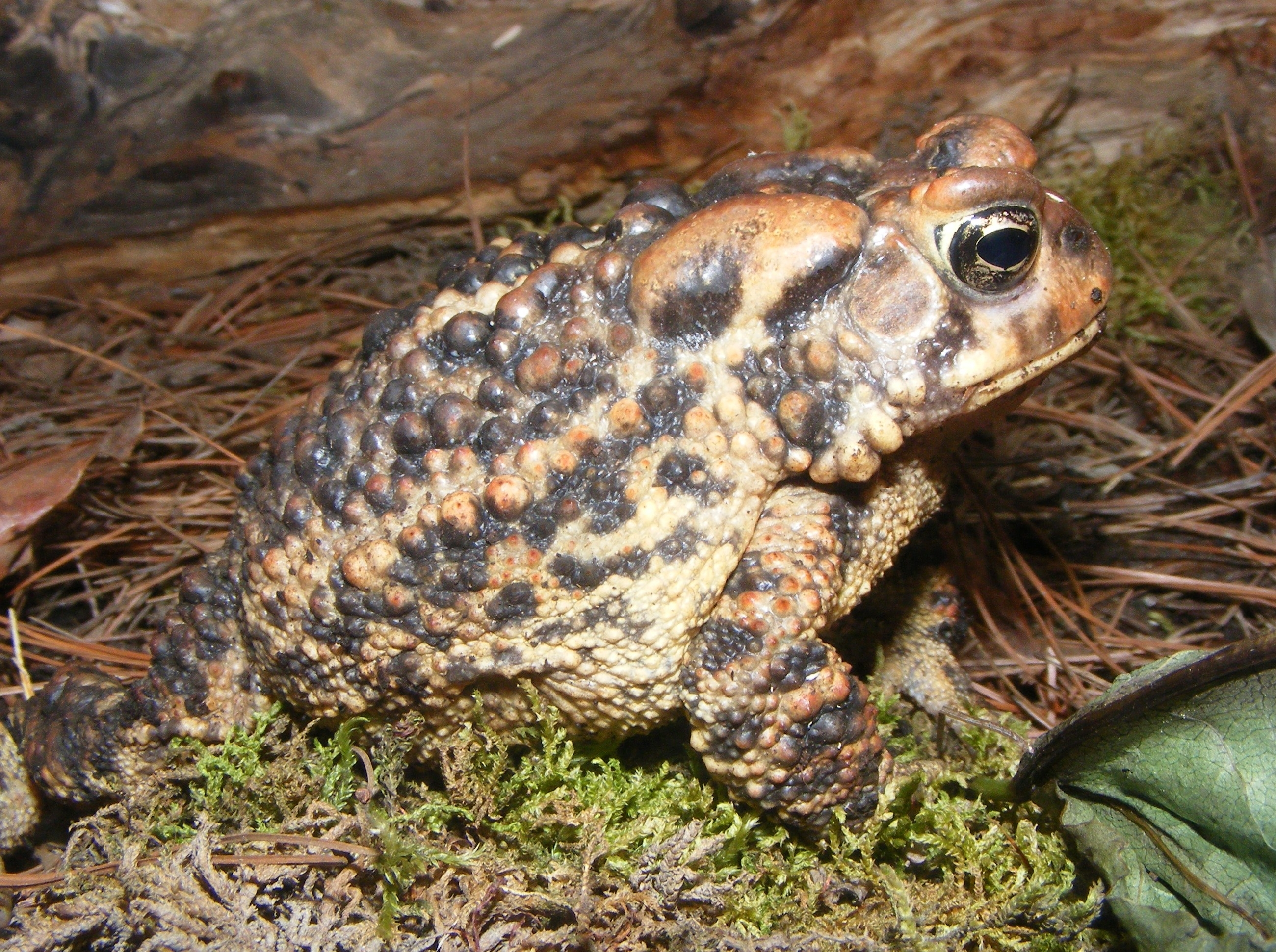 MIGRATE OVER TO CLEVELAND METROPARKS NORTH CHAGRIN NATURE CENTER FOR A TOAD-ALLY AWESOME AMPHIBIANS EVENT