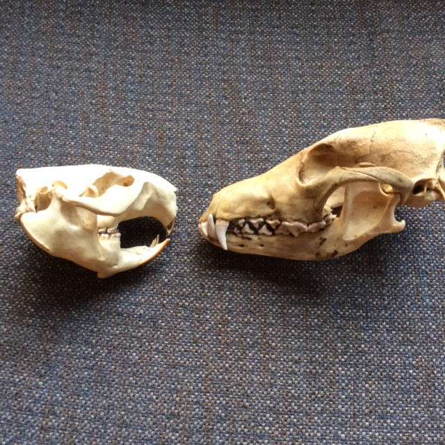 The Bones of the Matter | Cleveland Metroparks