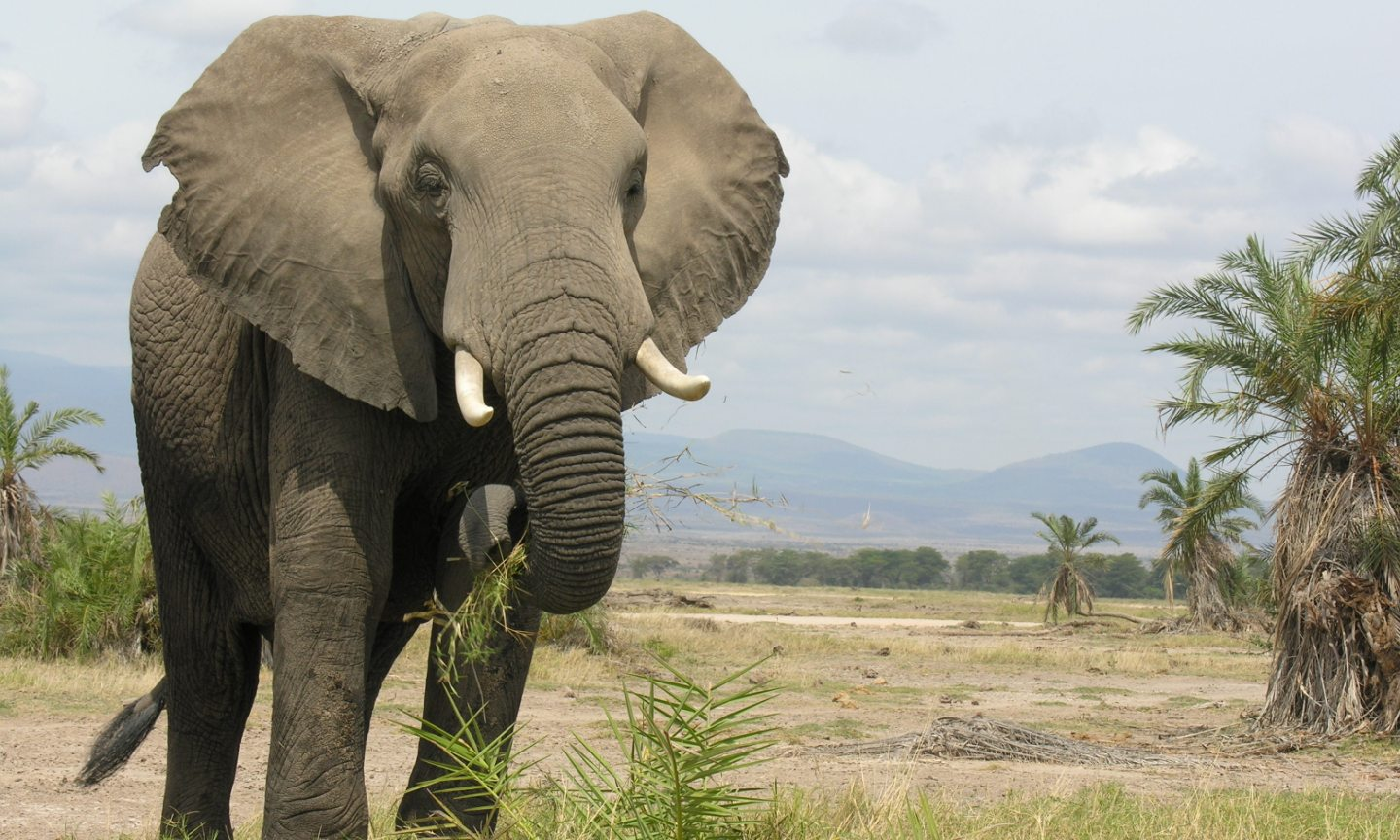 Take Action: BEAD the Change - Jewelry Making to Benefit Elephants