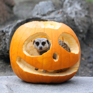 Boo at the Zoo is a family favorite at Cleveland Metroparks Zoo
